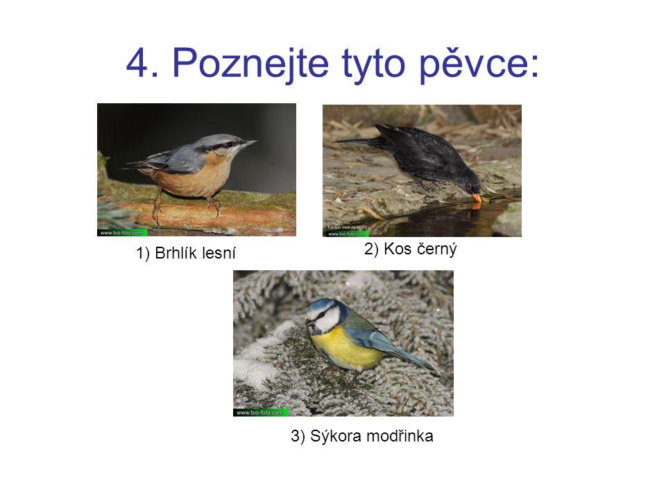 4. Poznejte tyto pěvce: 1) Brhlík lesní 2) Kos černý 3) Sýkora modřinka