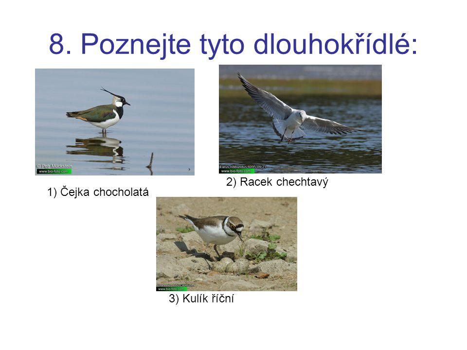 9. Poznejte tyto brodivé: 1) Čáp černý 2) Čáp bílý 3) Volavka popelavá
