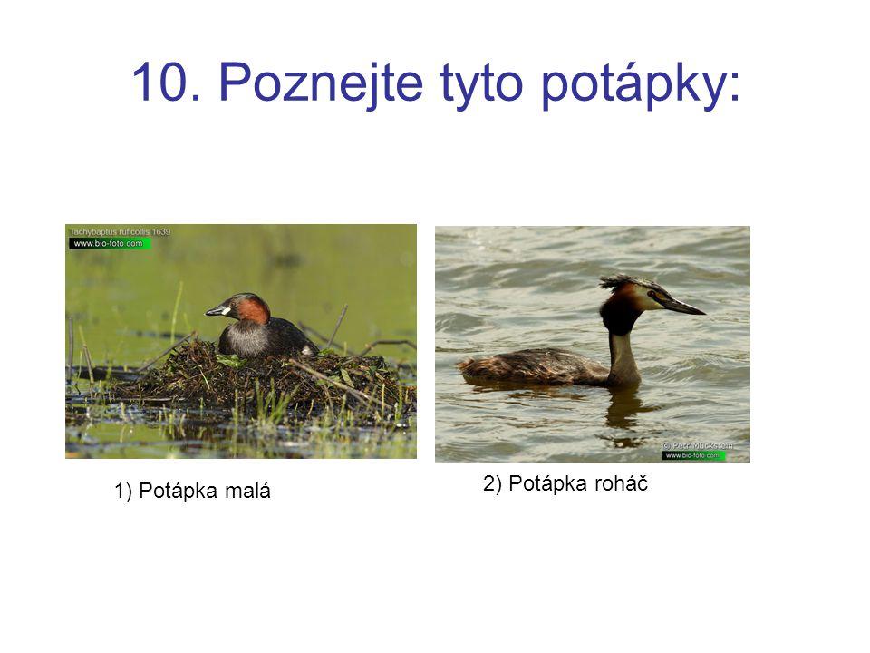 Použitý zdroj http://www.bio-foto.com