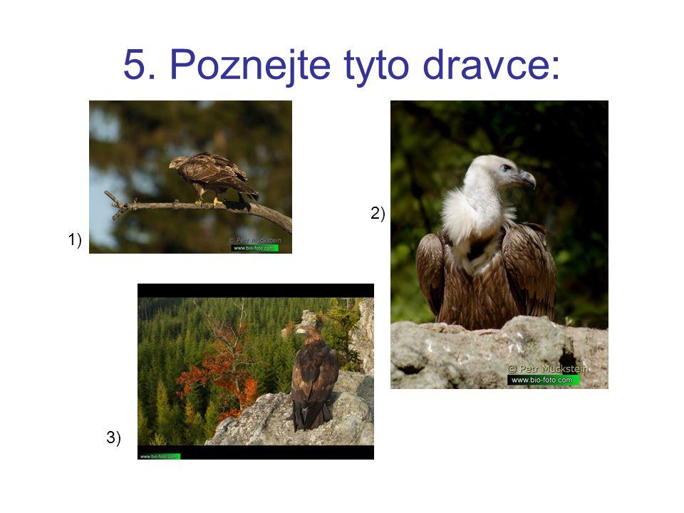 5. Poznejte tyto dravce: 1) 2) 3)