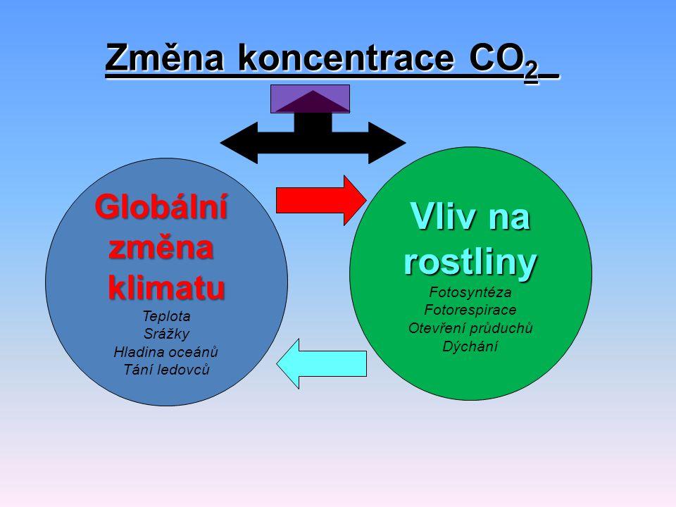 Změna koncentrace CO 2 _ Globální změna klimatu Teplota Srážky Hladina oceánů Tání ledovců Vliv na rostliny Fotosyntéza Fotorespirace Otevření průduchů Dýchání