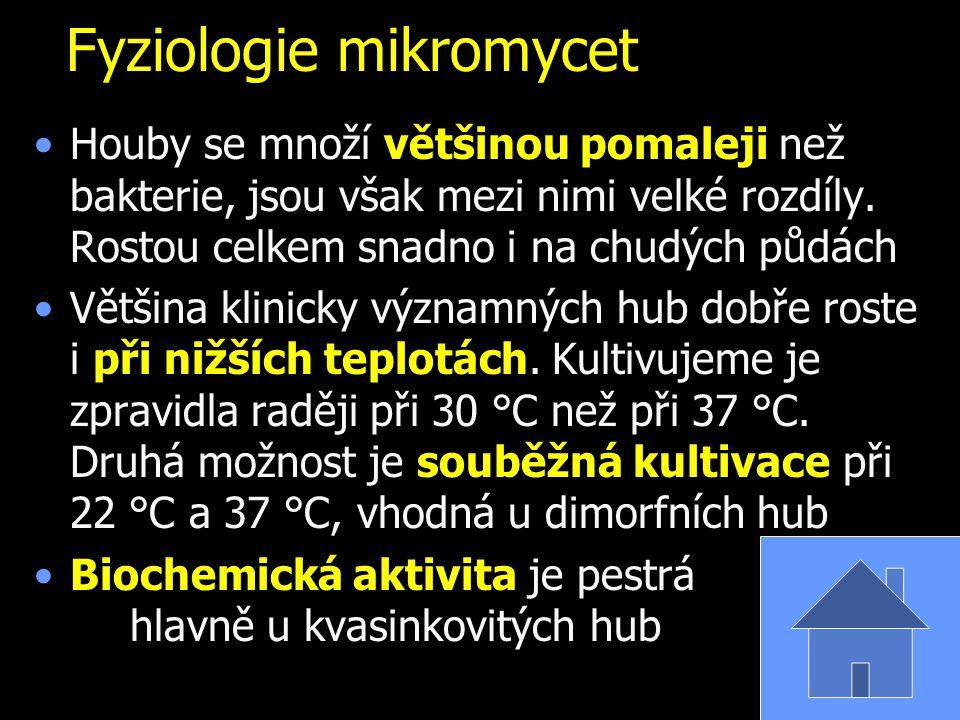 Aspergillus fumigatus www.sci.muni.cz www.mycolog.com