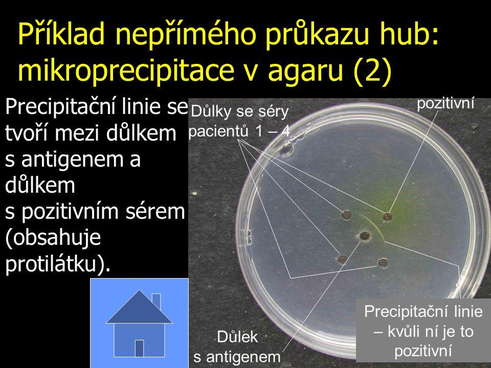 Příklad nepřímého průkazu hub: mikroprecipitace v agaru (1) Je to opakování z J06 V místě střetu antigenu s protilátkou vzniká precipitační linie (zde schematicky vyznačena zeleně)