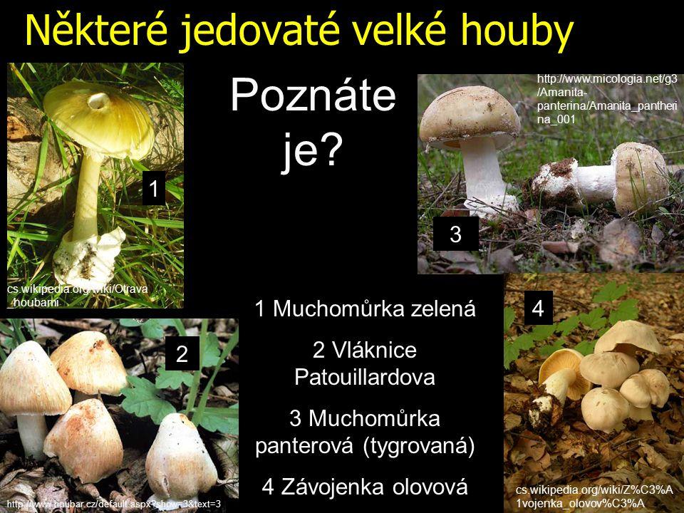 Některé jedovaté velké houby Poznáte je.