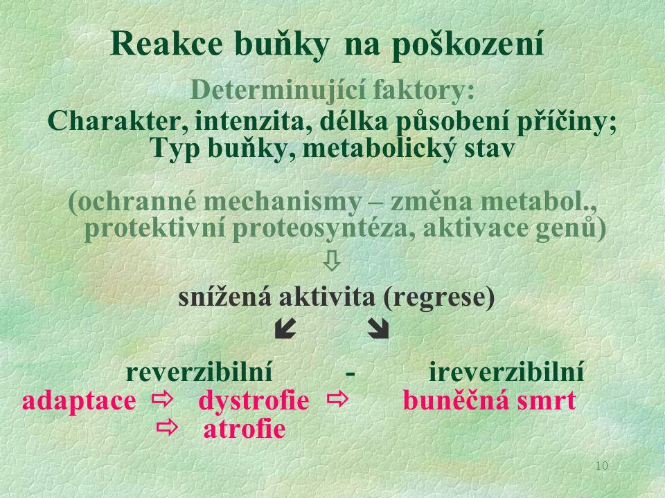 10 Reakce buňky na poškození Determinující faktory: Charakter, intenzita, délka působení příčiny; Typ buňky, metabolický stav (ochranné mechanismy – z
