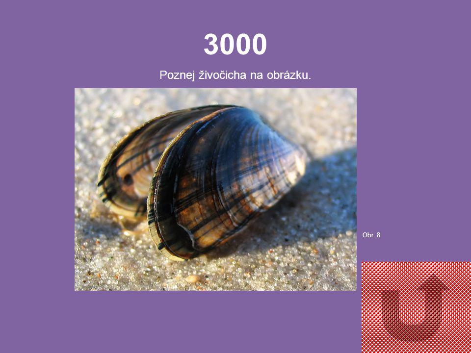 2000 Poznej živočicha na obrázku. Obr. 7