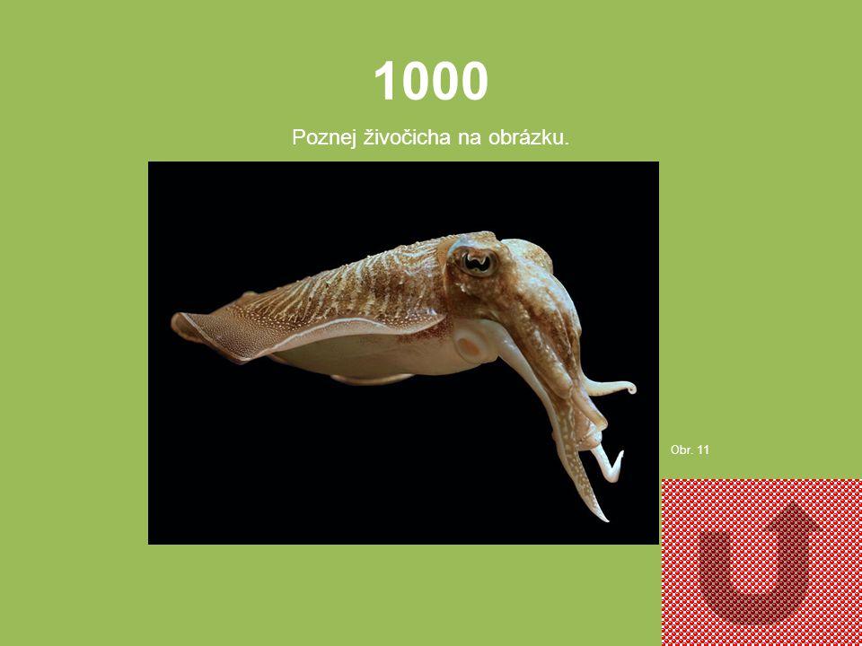5000 Poznej živočicha na obrázku. Obr. 10