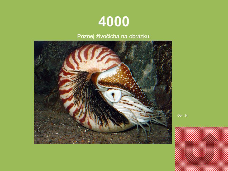 3000 Poznej živočicha na obrázku. Obr. 13