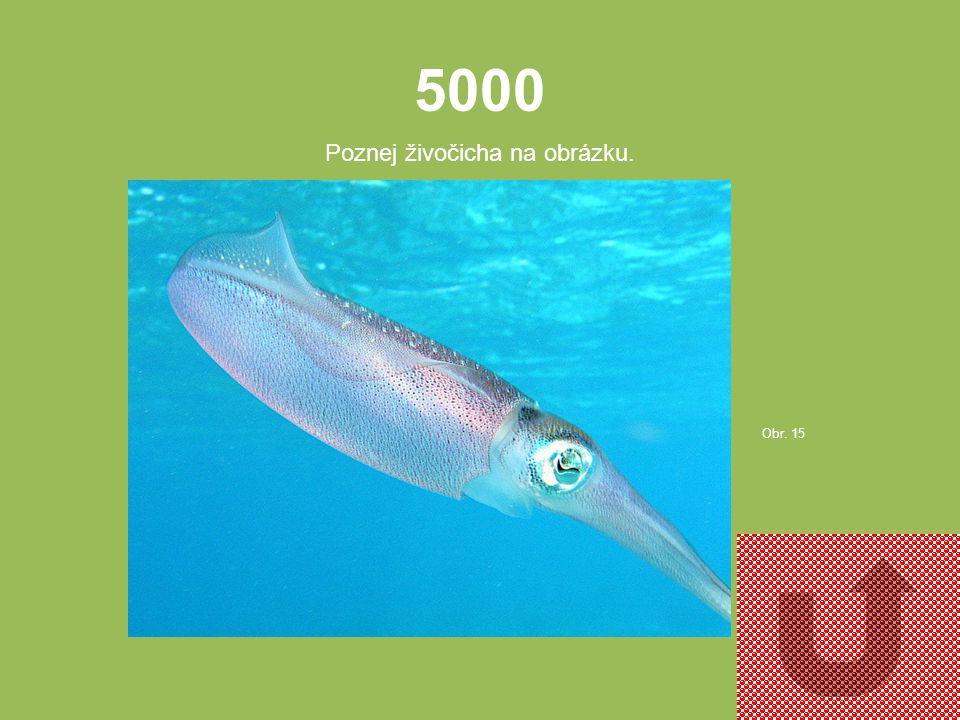 4000 Poznej živočicha na obrázku. Obr. 14