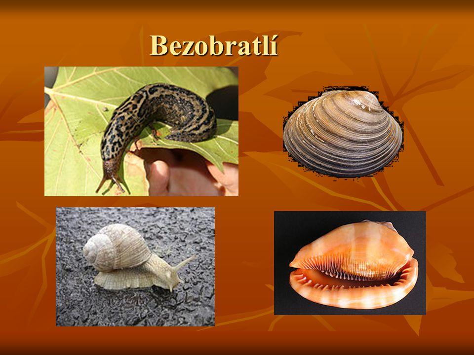 Bezobratlí měkkýši (mlži, plži, hlavonožci) : měkkýši (mlži, plži, hlavonožci) : škeble, hlemýžď škeble, hlemýžď kroužkovci : červi kroužkovci : červi členovci : pavoukovci, hmyz- brouci, blanokřídlí, dvoukřídlí, vážky členovci : pavoukovci, hmyz- brouci, blanokřídlí, dvoukřídlí, vážky