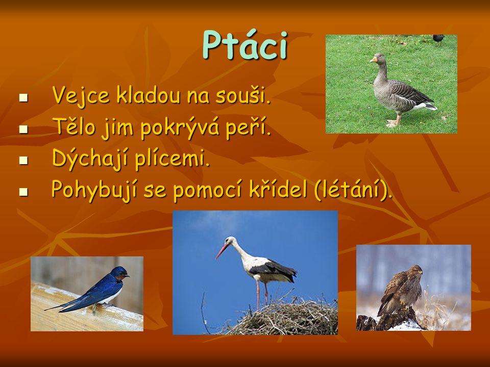Ptáci Vejce kladou na souši. Vejce kladou na souši. Tělo jim pokrývá peří. Tělo jim pokrývá peří. Dýchají plícemi. Dýchají plícemi. Pohybují se pomocí