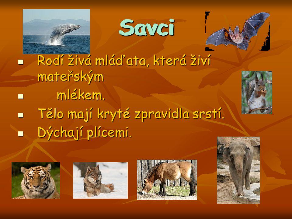 http://cs.wikipedia.org/wiki/Soubor:Tigerschnegel1.jpg http://cs.wikipedia.org/wiki/Soubor:Snail.jpg http://cs.wikipedia.org/wiki/Soubor:Callista_brevisiphonata.jpg http://cs.wikipedia.org/wiki/Soubor:Mealworms_in_plastic_container_of_bran.jpg http://upload.wikimedia.org/wikipedia/commons/thumb/8/81/Melolontha_melolontha_MHNT.jpg/258px-Melolontha_melolontha_MHNT.jpg http://upload.wikimedia.org/wikipedia/commons/thumb/2/2c/Calliphora_spec.jpg/300px-Calliphora_spec.jpg http://upload.wikimedia.org/wikipedia/commons/thumb/8/81/CrocothemisErythraeaMale.jpg/258px-CrocothemisErythraeaMale.jpg http://upload.wikimedia.org/wikipedia/commons/thumb/8/85/Pterophyllum_altum.jpg/220px-Pterophyllum_altum.jpg http://cs.wikipedia.org/wiki/Soubor:Esox_lucius_Prague_Vltava_1.jpg http://cs.wikipedia.org/wiki/Soubor:European_eel_in_aquarium.JPG http://upload.wikimedia.org/wikipedia/commons/thumb/a/a8/Common_carp.jpg/320px-Common_carp.jpg http://cs.wikipedia.org/wiki/Soubor:Mlok.JPG http://upload.wikimedia.org/wikipedia/commons/thumb/e/e0/Kammmolchmaennchen.jpg/255px-Kammmolchmaennchen.jpg http://upload.wikimedia.org/wikipedia/commons/thumb/b/be/European_Common_Frog_Rana_temporaria_%28cropped%29.jpg/265px- European_Common_Frog_Rana_temporaria_%28cropped%29.jpg http://upload.wikimedia.org/wikipedia/commons/thumb/7/7a/Cobra_hood.jpg/258px-Cobra_hood.jpg http://cs.wikipedia.org/wiki/Soubor:Galapagos_Geochelone_nigra_porteri.jpg http://upload.wikimedia.org/wikipedia/commons/thumb/3/34/Anser_anser_1_%28Piotr_Kuczynski%29.jpg/258px- Anser_anser_1_%28Piotr_Kuczynski%29.jpg http://cs.wikipedia.org/wiki/Soubor:Landsvale.jpg http://upload.wikimedia.org/wikipedia/commons/thumb/d/d5/White_Stork_%28Ciconia_ciconia%29.jpg/225px- White_Stork_%28Ciconia_ciconia%29.jpg http://upload.wikimedia.org/wikipedia/commons/thumb/6/67/Buteo_buteo_1_%28Lukasz_Lukasik%29.jpg/225px- Buteo_buteo_1_%28Lukasz_Lukasik%29.jpg http://upload.wikimedia.org/wikipedia/commons/thumb/0/07/Jumping_Humpback_whale.jpg/300px-Jumping_
