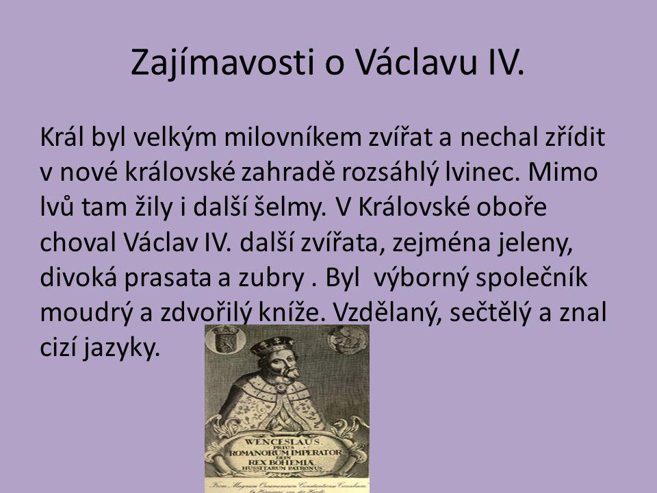 Zajímavosti o Václavu IV. Král byl velkým milovníkem zvířat a nechal zřídit v nové královské zahradě rozsáhlý lvinec. Mimo lvů tam žily i další šelmy.