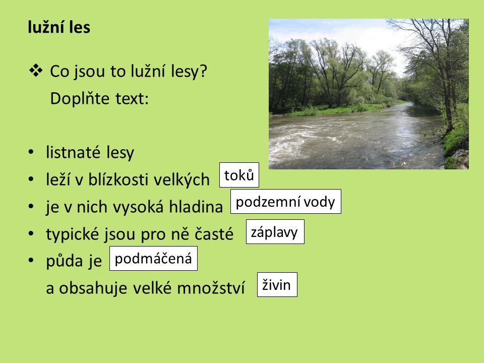 lužní les  Co jsou to lužní lesy? Doplňte text: listnaté lesy leží v blízkosti velkých je v nich vysoká hladina typické jsou pro ně časté půda je a o