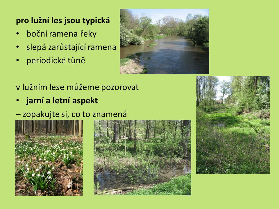 pro lužní les jsou typická boční ramena řeky slepá zarůstající ramena periodické tůně v lužním lese můžeme pozorovat jarní a letní aspekt – zopakujte