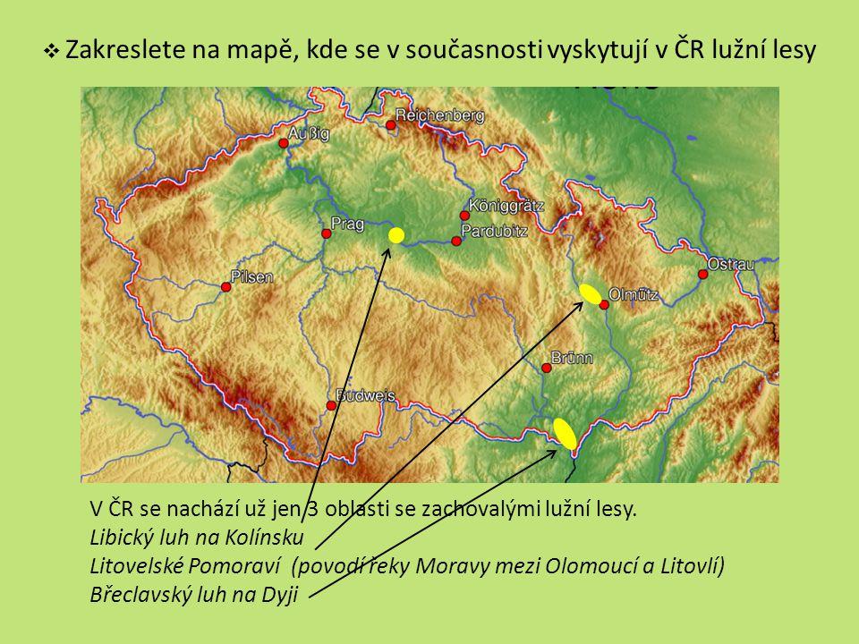  Zakreslete na mapě, kde se v současnosti vyskytují v ČR lužní lesy V ČR se nachází už jen 3 oblasti se zachovalými lužní lesy. Libický luh na Kolíns