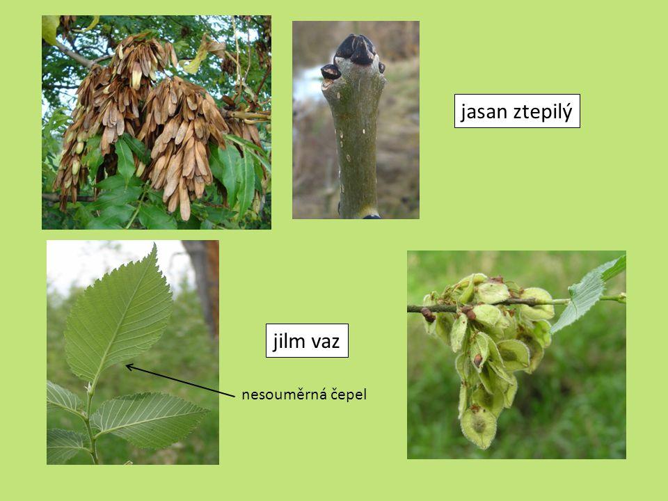 organizmy v lužním lese druhově nejbohatší ekosystém v ČR – mnoho rostlin i živočichů  Tady jsou příklady některých živočichů – poznáte je.