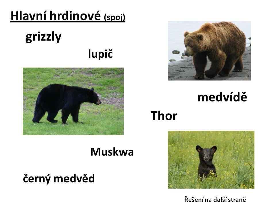 Hlavní hrdinové (spoj) grizzly Thor Muskwa medvídě černý medvěd lupič Řešení na další straně