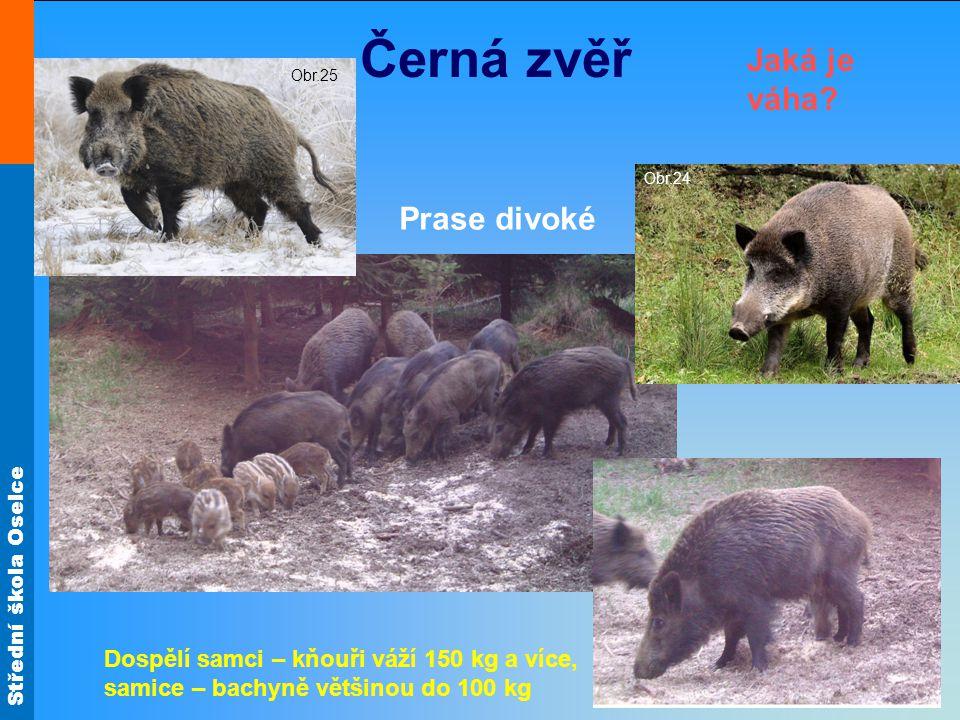 Střední škola Oselce Nízká zvěř Zajíc polní Králík divoký Co je větší.