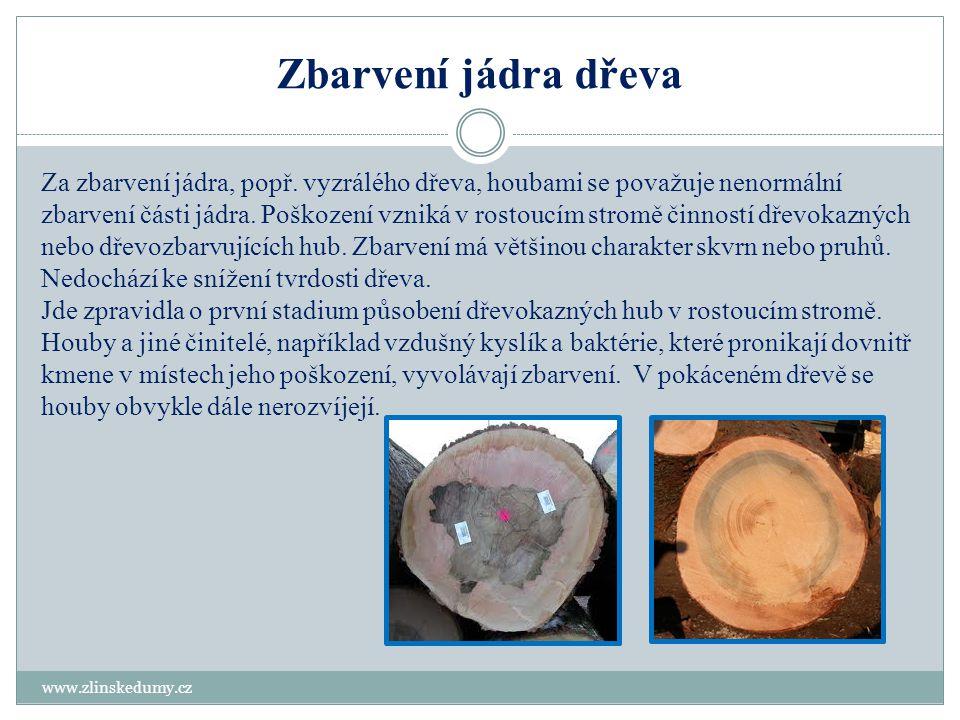 Zbarvení jádra dřeva www.zlinskedumy.cz Za zbarvení jádra, popř. vyzrálého dřeva, houbami se považuje nenormální zbarvení části jádra. Poškození vznik