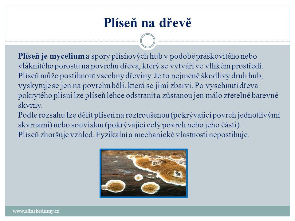 Plíseň na dřevě www.zlinskedumy.cz Plíseň je mycelium a spory plísňových hub v podobě práškovitého nebo vláknitého porostu na povrchu dřeva, který se