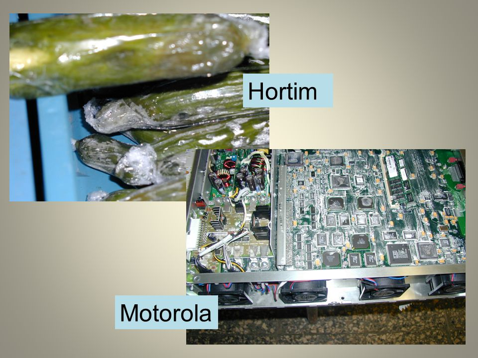 Hortim Motorola