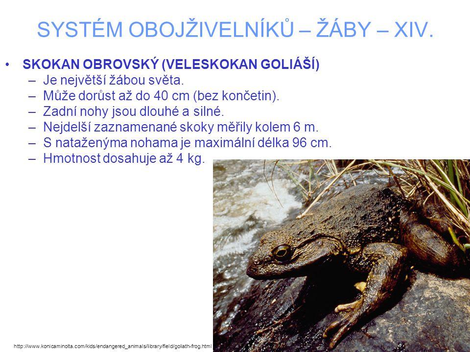 SYSTÉM OBOJŽIVELNÍKŮ – ŽÁBY – XIV. SKOKAN OBROVSKÝ (VELESKOKAN GOLIÁŠÍ) –Je největší žábou světa. –Může dorůst až do 40 cm (bez končetin). –Zadní nohy