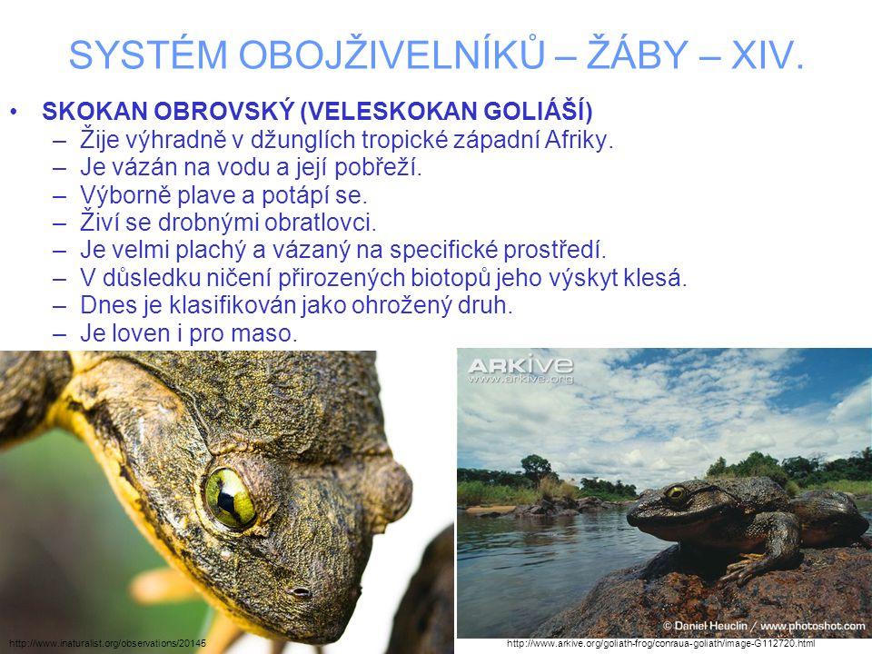 SYSTÉM OBOJŽIVELNÍKŮ – ŽÁBY – XIV. SKOKAN OBROVSKÝ (VELESKOKAN GOLIÁŠÍ) –Žije výhradně v džunglích tropické západní Afriky. –Je vázán na vodu a její p