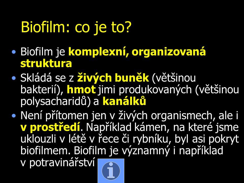 Biofilm: co je to? Biofilm je komplexní, organizovaná struktura Skládá se z živých buněk (většinou bakterií), hmot jimi produkovaných (většinou polysa
