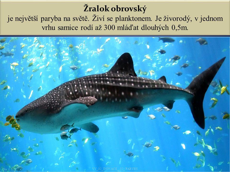 Žralok obrovský je největší paryba na světě.Živí se planktonem.