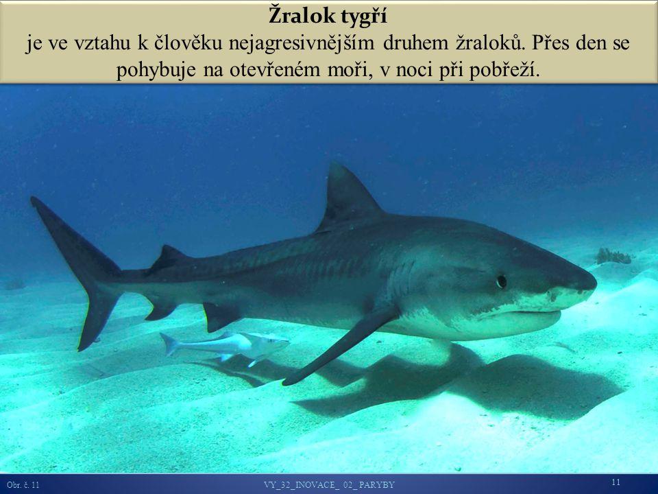 Žralok tygří je ve vztahu k člověku nejagresivnějším druhem žraloků.