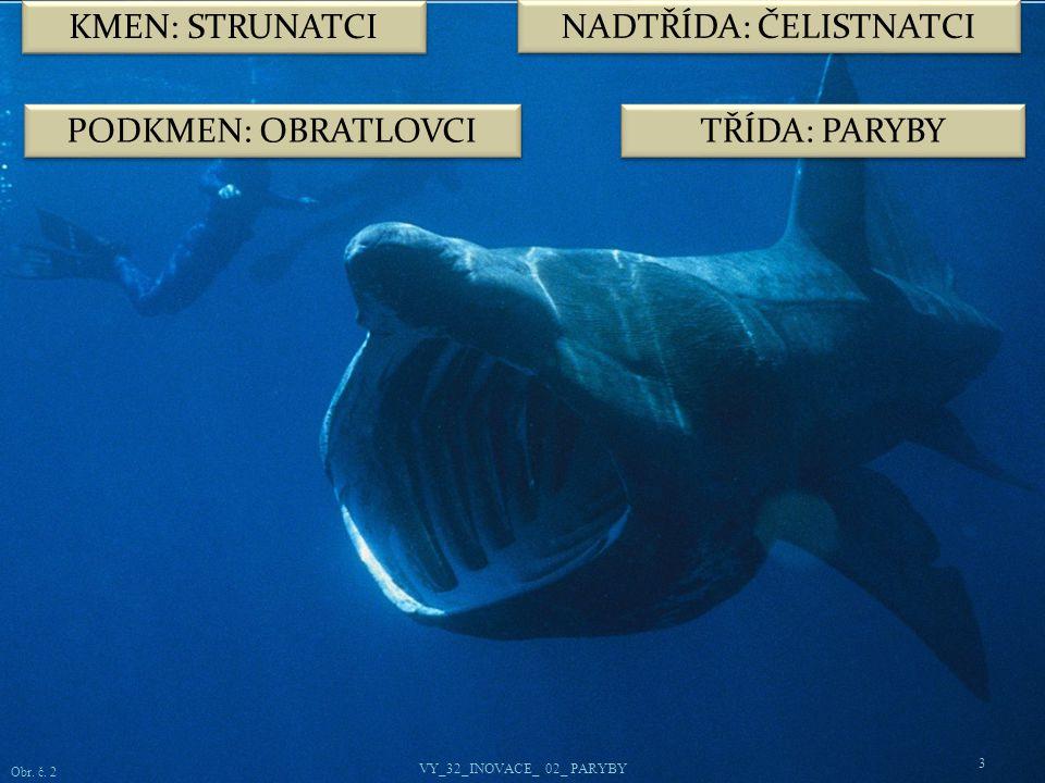TŘÍDA: PARYBY NADŘÁD: ŽRALOCI 4 Žraloci patří k nejstarším skupinám živočichů.