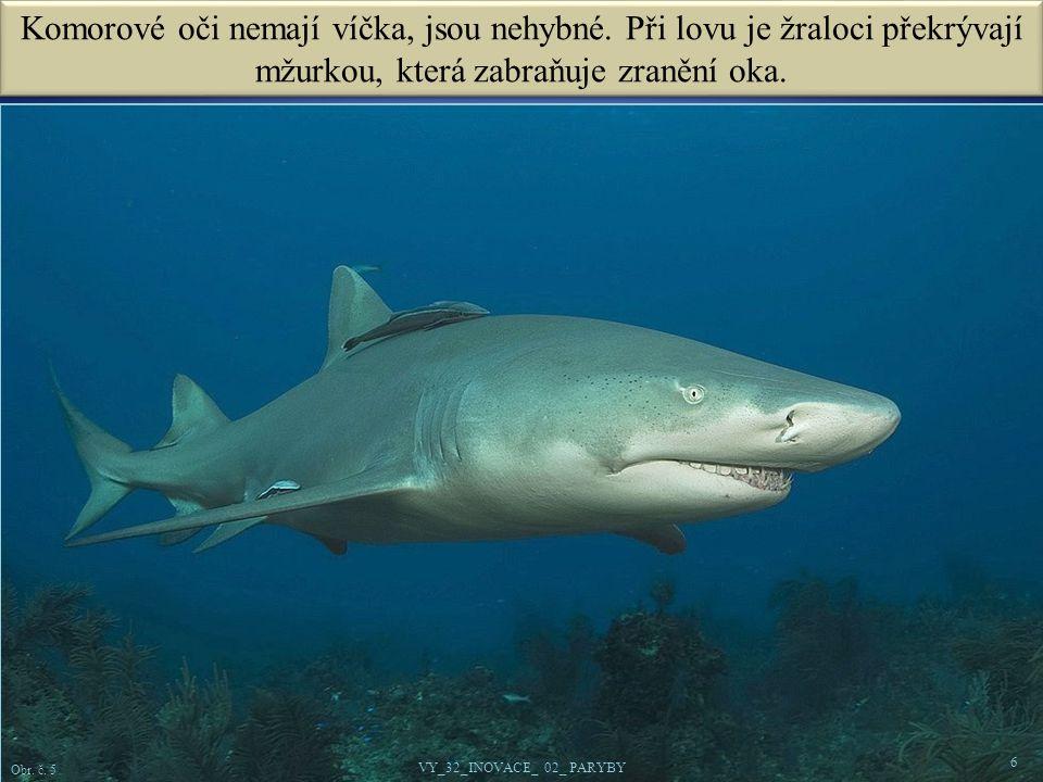 6 Obr.č. 5 VY_32_INOVACE_ 02_ PARYBY Komorové oči nemají víčka, jsou nehybné.