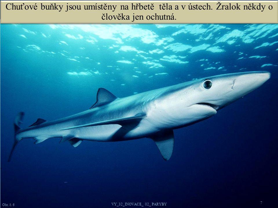Žralok mako na kořist útočí zespodu a využívá moment překvapení.
