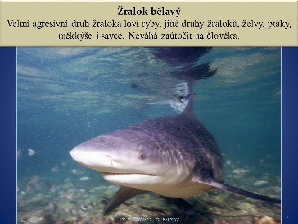 Žralok bělavý Velmi agresivní druh žraloka loví ryby, jiné druhy žraloků, želvy, ptáky, měkkýše i savce.