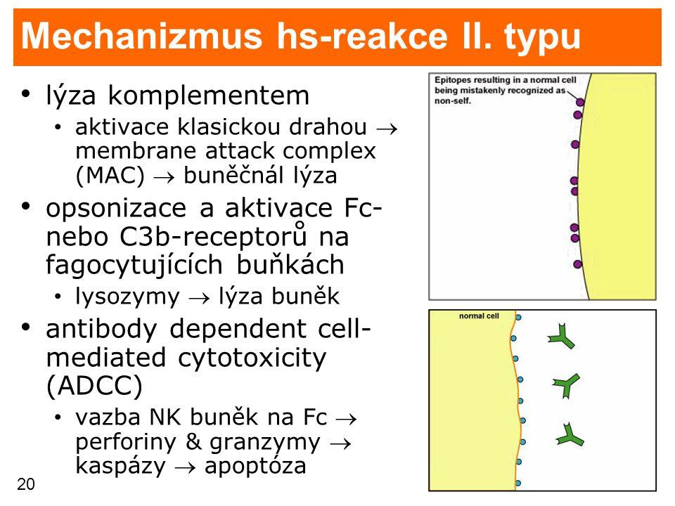 20 Mechanizmus hs-reakce II. typu lýza komplementem aktivace klasickou drahou  membrane attack complex (MAC)  buněčnál lýza opsonizace a aktivace Fc