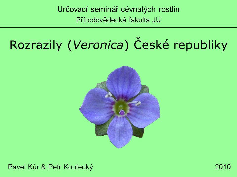 Rozrazily (Veronica) České republiky Pavel Kúr & Petr Koutecký Určovací seminář cévnatých rostlin Přírodovědecká fakulta JU 2010
