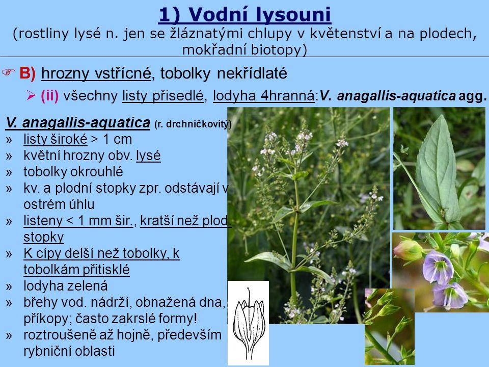 1) Vodní lysouni (rostliny lysé n. jen se žláznatými chlupy v květenství a na plodech, mokřadní biotopy)  B) hrozny vstřícné, tobolky nekřídlaté  (i