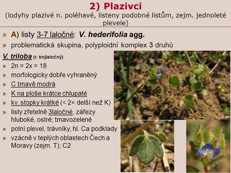 2) Plazivci (lodyhy plazivé n. poléhavé, listeny podobné listům, zejm. jednoleté plevele) »A) listy 3-7 laločné: V. hederifolia agg. »problematická sk