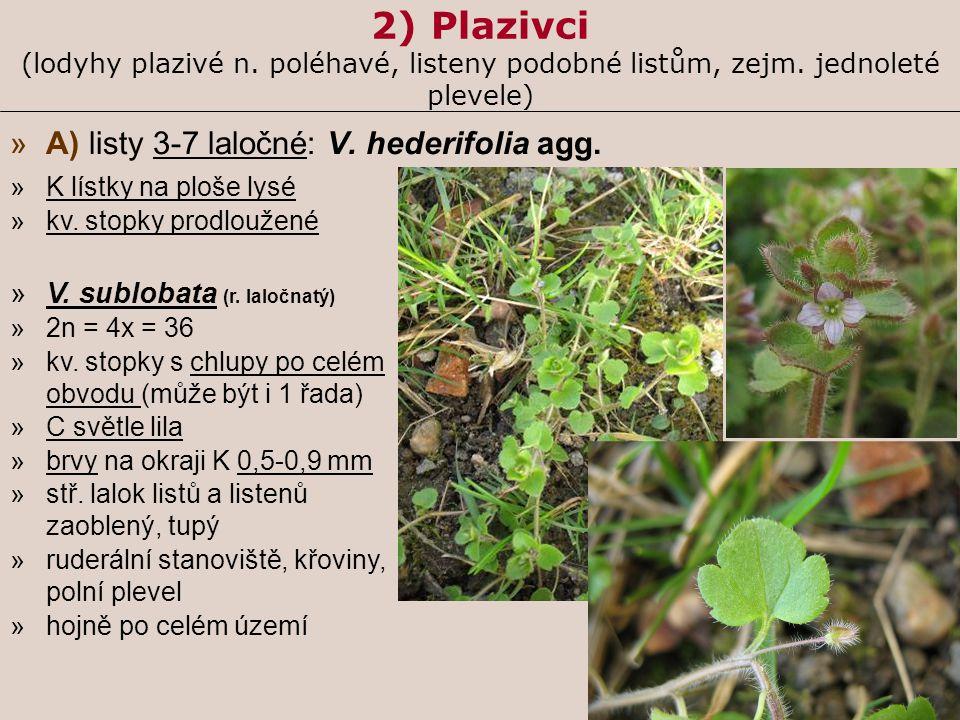 2) Plazivci (lodyhy plazivé n. poléhavé, listeny podobné listům, zejm. jednoleté plevele) »A) listy 3-7 laločné: V. hederifolia agg. »K lístky na ploš