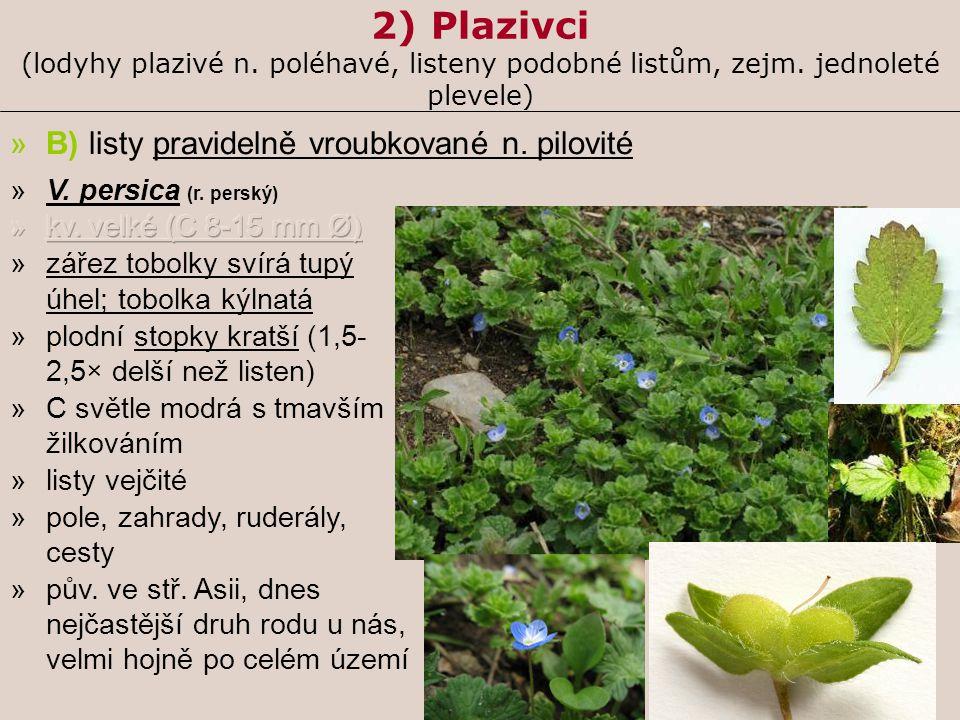 2) Plazivci (lodyhy plazivé n. poléhavé, listeny podobné listům, zejm. jednoleté plevele) »B) listy pravidelně vroubkované n. pilovité