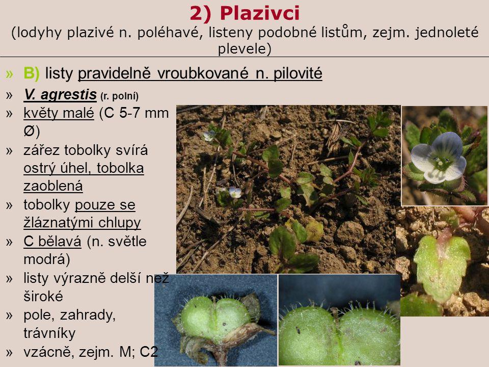 2) Plazivci (lodyhy plazivé n. poléhavé, listeny podobné listům, zejm. jednoleté plevele) »B) listy pravidelně vroubkované n. pilovité »V. agrestis (r