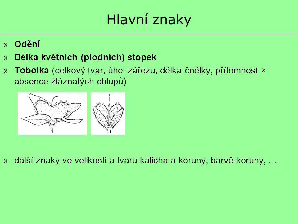 Hlavní znaky »Odění »Délka květních (plodních) stopek »Tobolka (celkový tvar, úhel zářezu, délka čnělky, přítomnost × absence žláznatých chlupů) »dalš