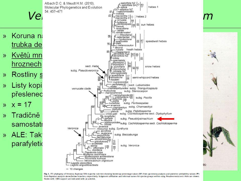 Veronica sect. Pseudolysimachium »Koruna nálevkovitá, dvoupyská, C trubka delší než široká »Květů mnoho v hustých koncových hroznech »Rostliny statné,