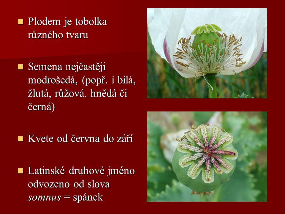Plodem je tobolka různého tvaru Plodem je tobolka různého tvaru Semena nejčastěji modrošedá, (popř. i bílá, žlutá, růžová, hnědá či černá) Semena nejč