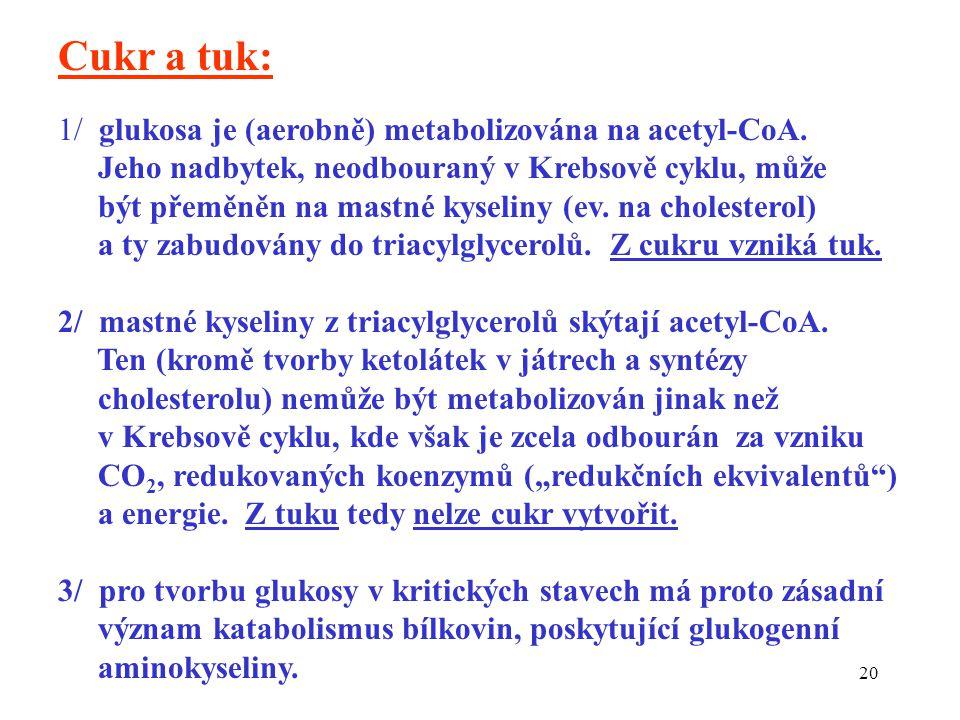 20 Cukr a tuk: 1/ glukosa je (aerobně) metabolizována na acetyl-CoA.