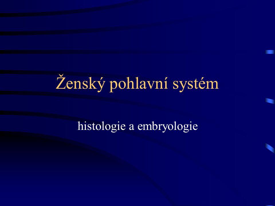Ženský pohlavní systém histologie a embryologie