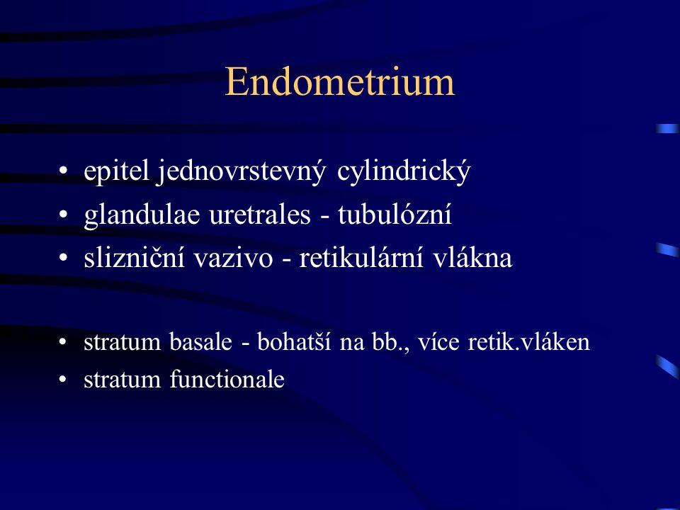 Endometrium epitel jednovrstevný cylindrický glandulae uretrales - tubulózní slizniční vazivo - retikulární vlákna stratum basale - bohatší na bb., ví