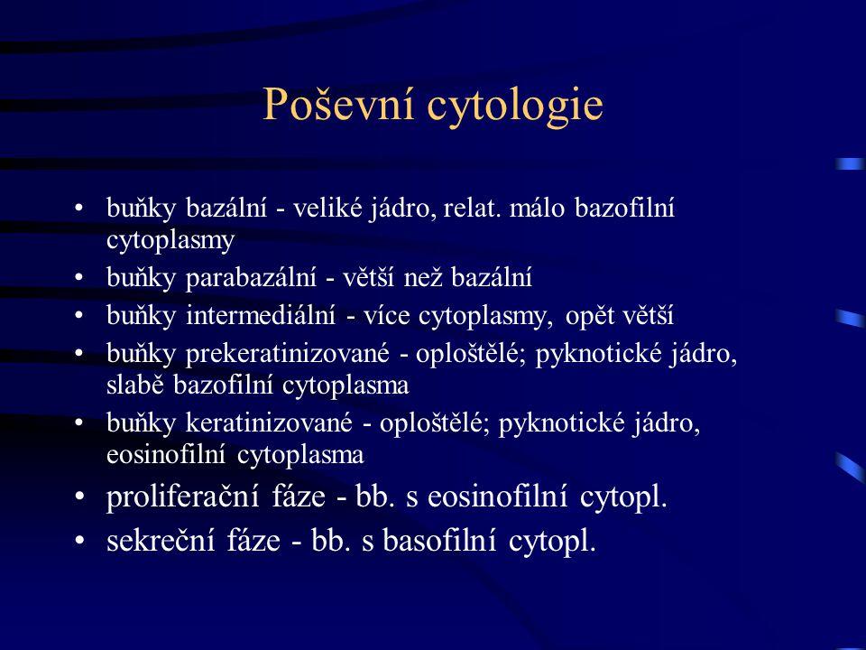 Poševní cytologie buňky bazální - veliké jádro, relat. málo bazofilní cytoplasmy buňky parabazální - větší než bazální buňky intermediální - více cyto