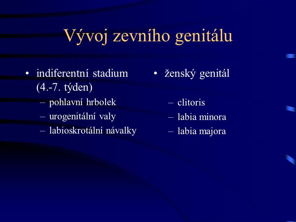 Vývoj zevního genitálu indiferentní stadium (4.-7. týden) –pohlavní hrbolek –urogenitální valy –labioskrotální návalky ženský genitál –clitoris –labia